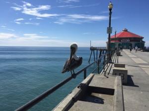 Huntington Beach Pier mit Pelikan.